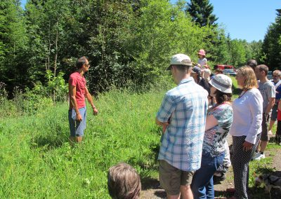 Atelier découverte des plantes sauvages comestibles 2