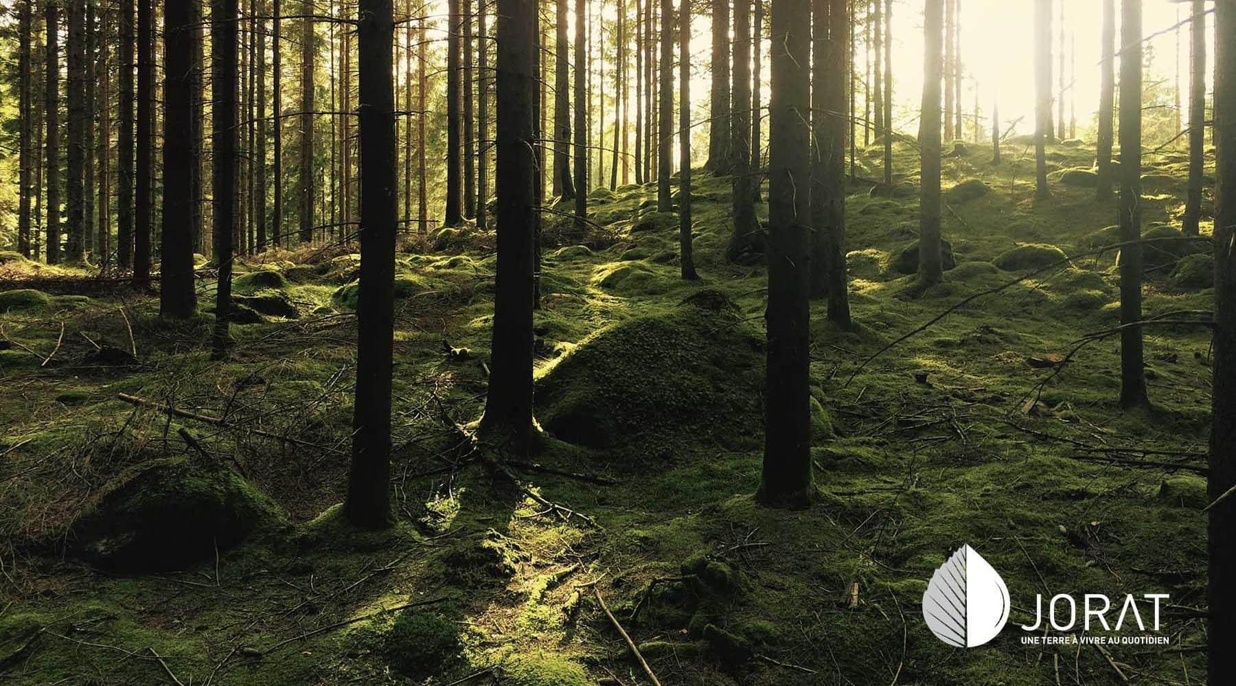 La forêt joratoise