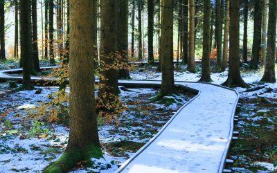 Terre & Nature : «Un sentier ouvert aux handicapés»
